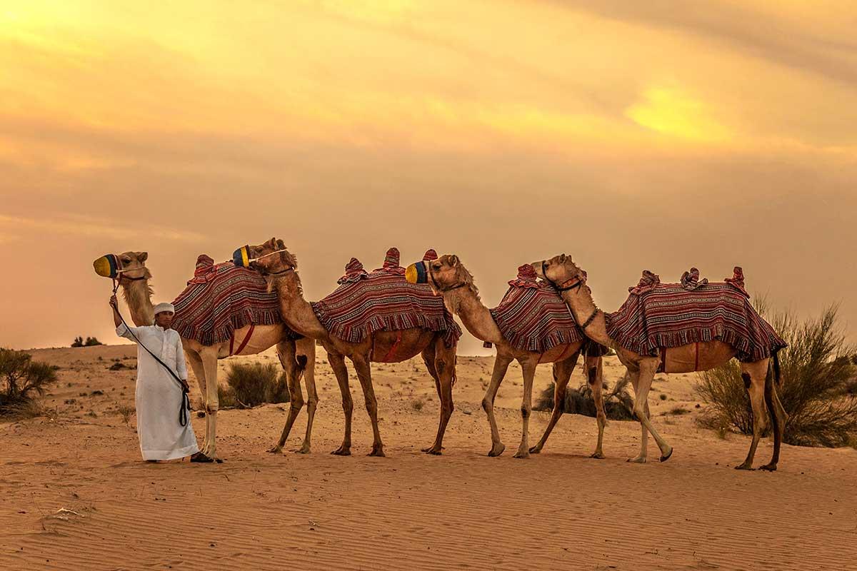Circuit Le royaume des sables