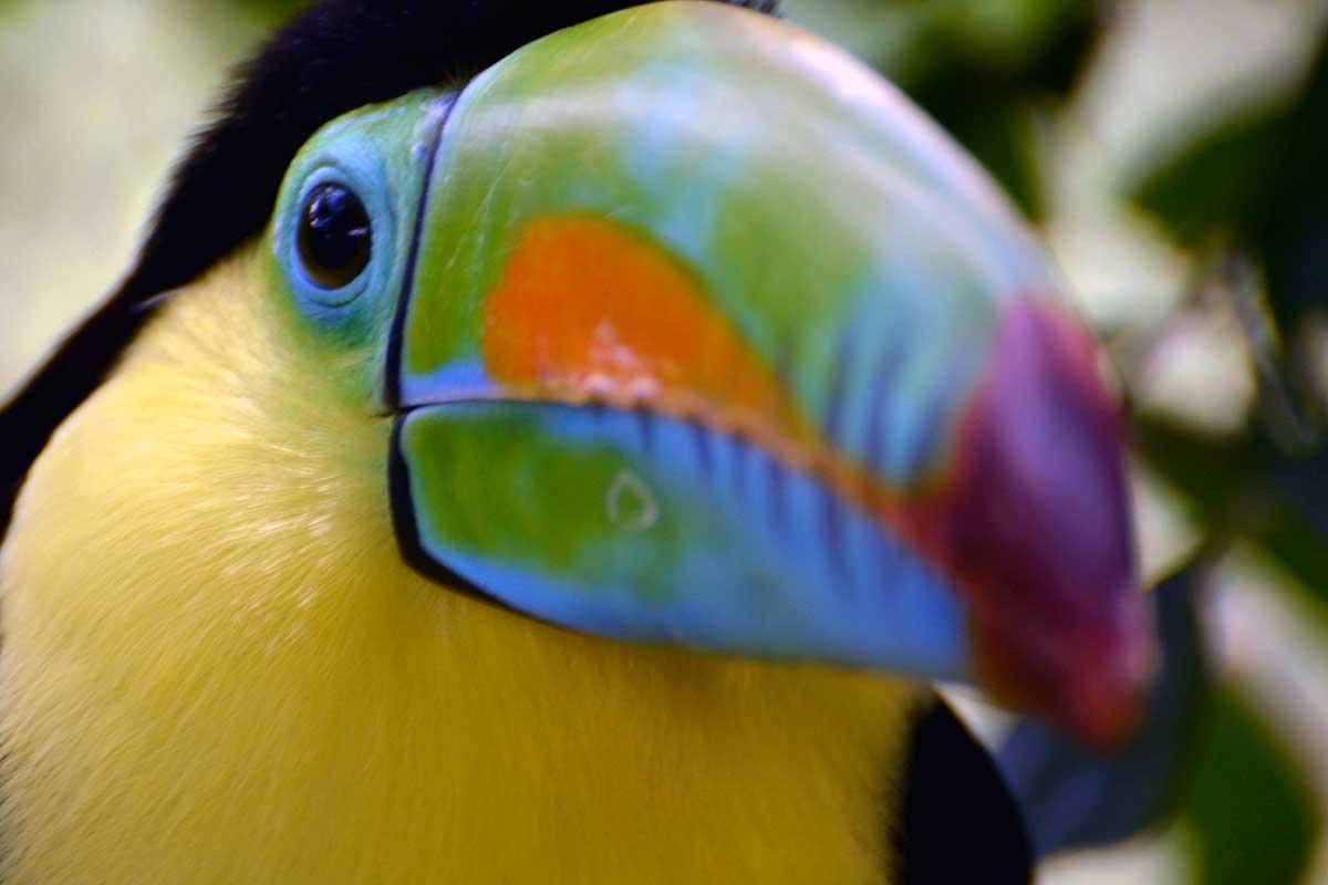Circuit Découverte et aventure au Costa Rica - voyage  - sejour