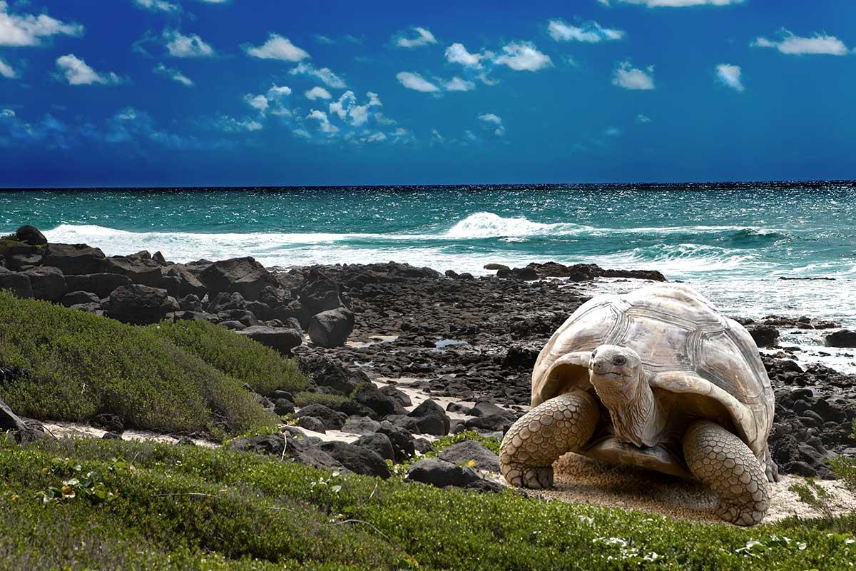 Au coeur des Galápagos