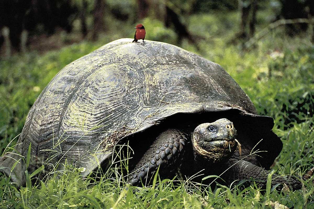 ECUCT006 tortue-geante-circuits-equateur-galapagos-tui