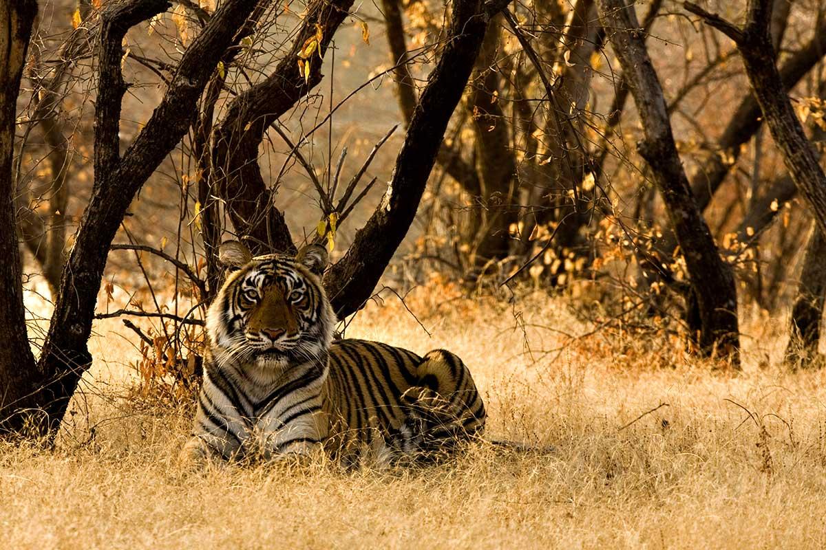 Circuit Reserves Et Tigres Inde Du Nord Et Rajasthan