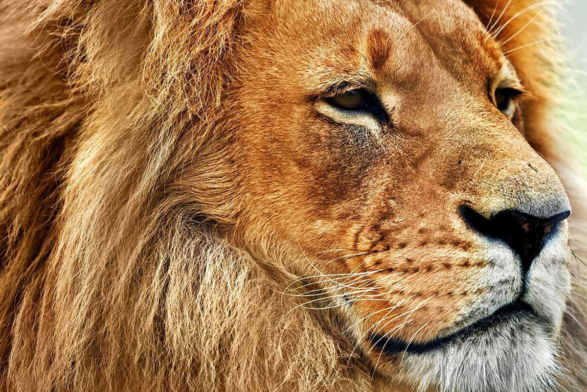 Circuit privé Au pays du Roi Lion
