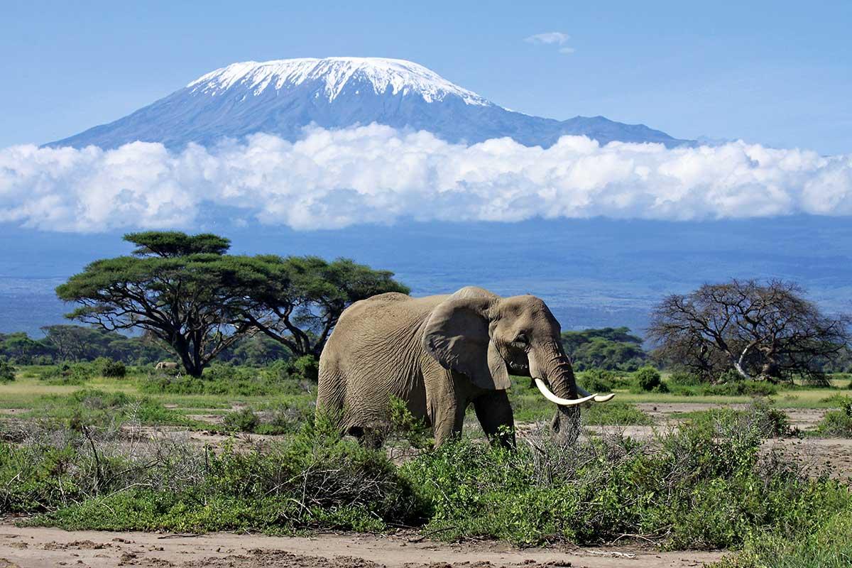 Circuit Des neiges du Kilimandjaro aux plages de Zanzibar