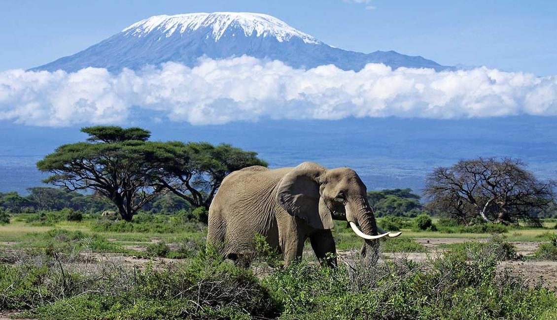 Circuit Des neiges du Kilimandjaro aux plages de Zanzibar - TUI