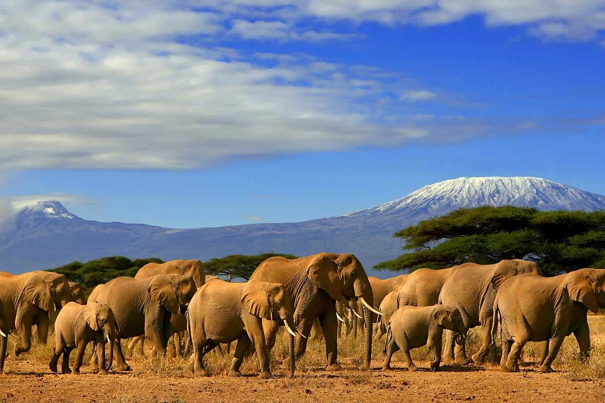 Kenya - Circuit Safari Kilimandjaro et Extension Balnéaire à Mombasa