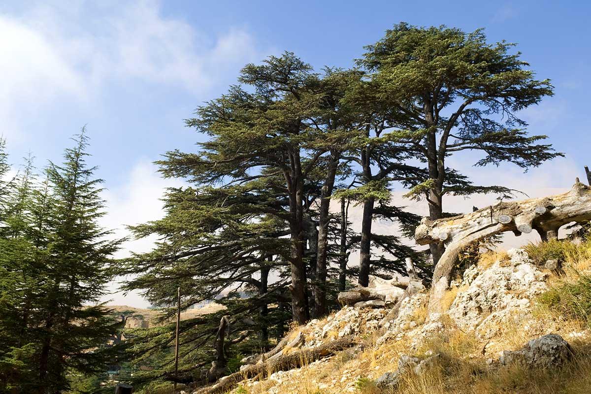 Circuit Saveurs libanaises