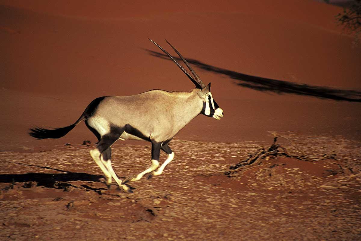 Photo n° 6 Circuit Visage de Namibie
