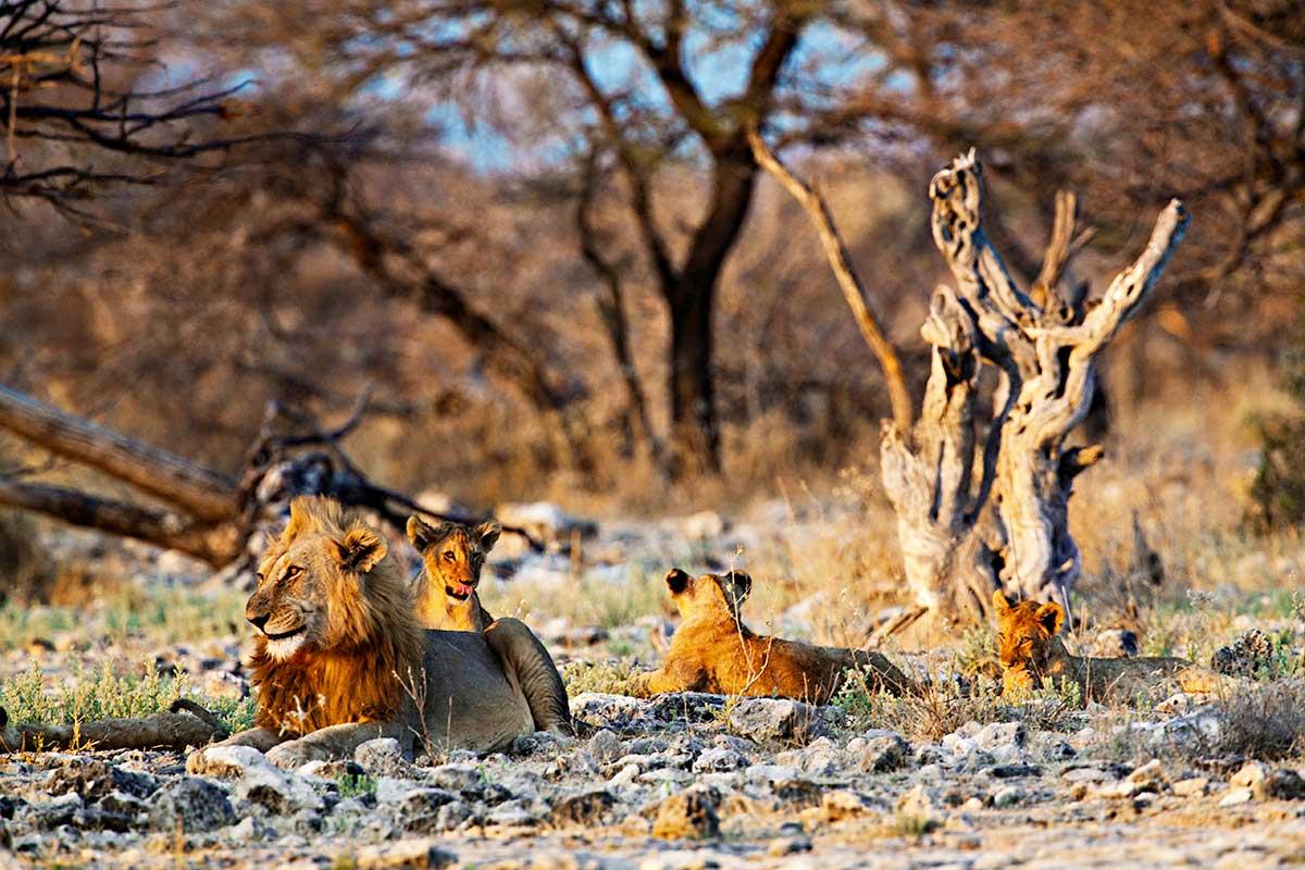 Namibie - Circuit Pays Himba, Dunes et Réserves de Namibie