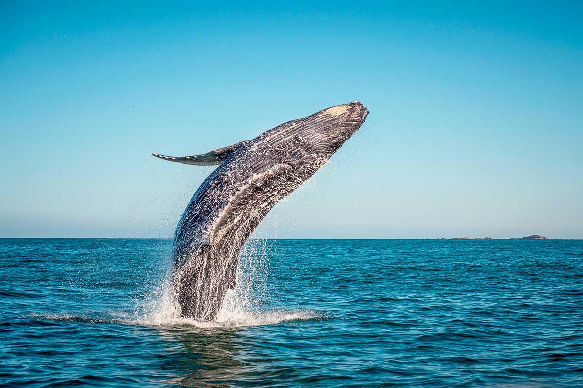 Circuit Aurores boréales et baleines