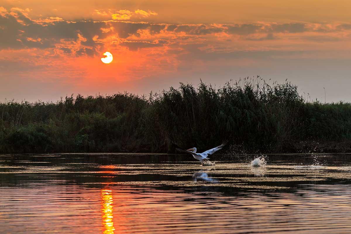 Roumanie - Circuit La perle des Carpates + Extension À la découverte du delta du Danube