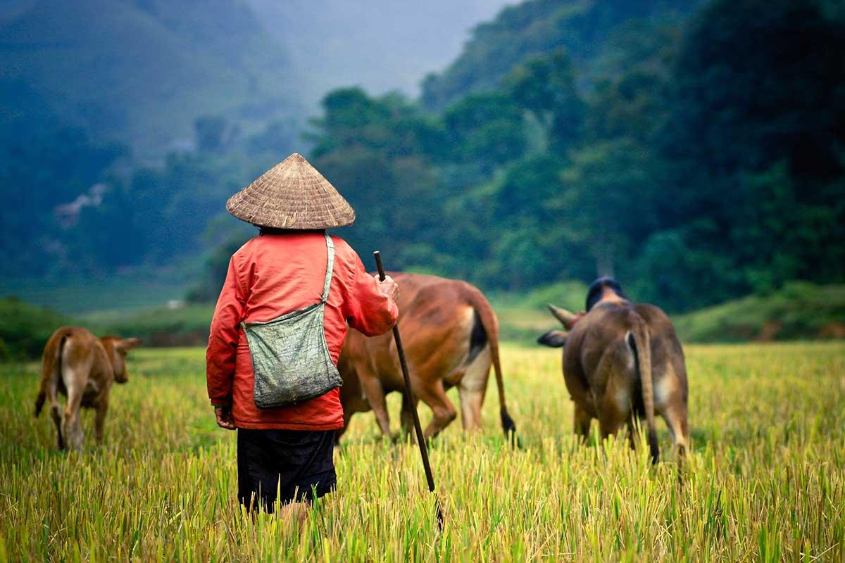 Circuit Vietnam étonnant - voyage  - sejour