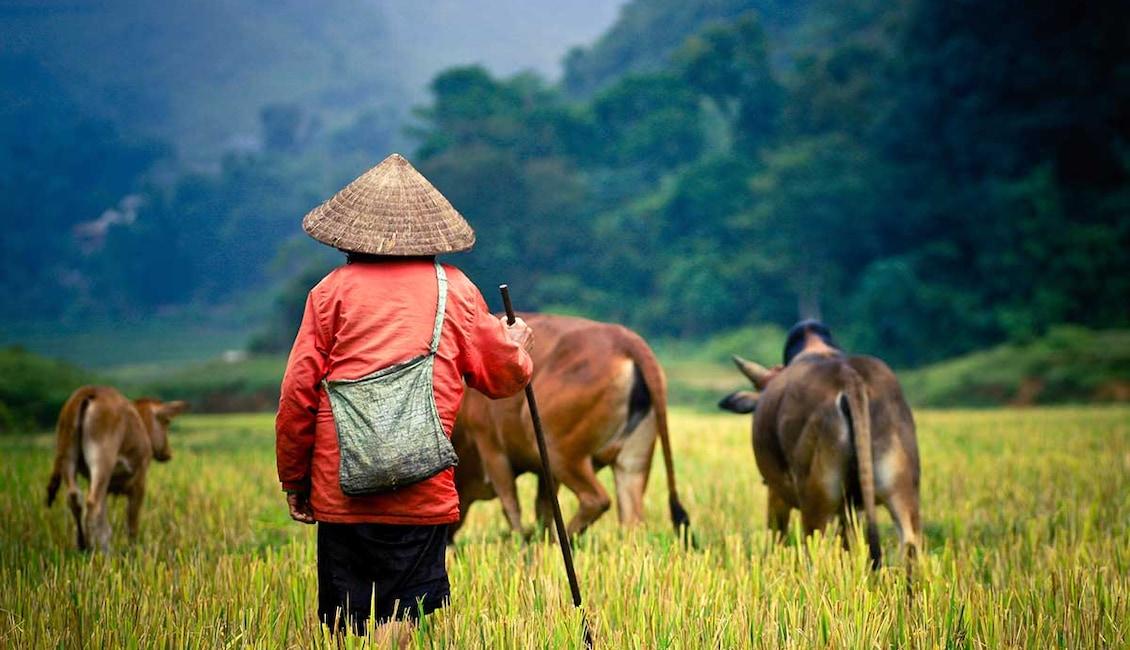 Circuit Vietnam étonnant - TUI