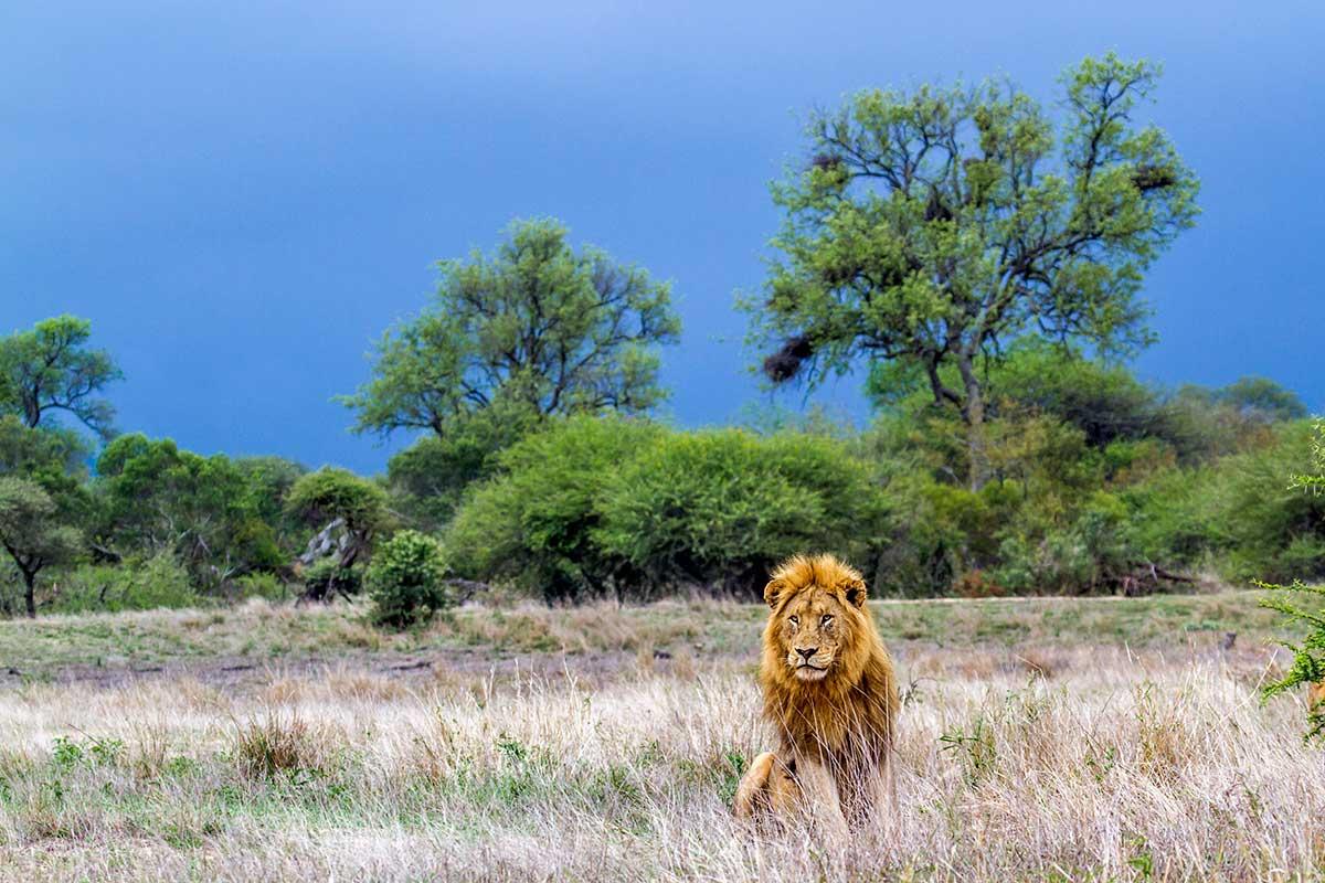 Afrique du Sud - Botswana - Swaziland - Circuit Cap sur l'Afrique du Sud avec extension aux Chutes Victoria