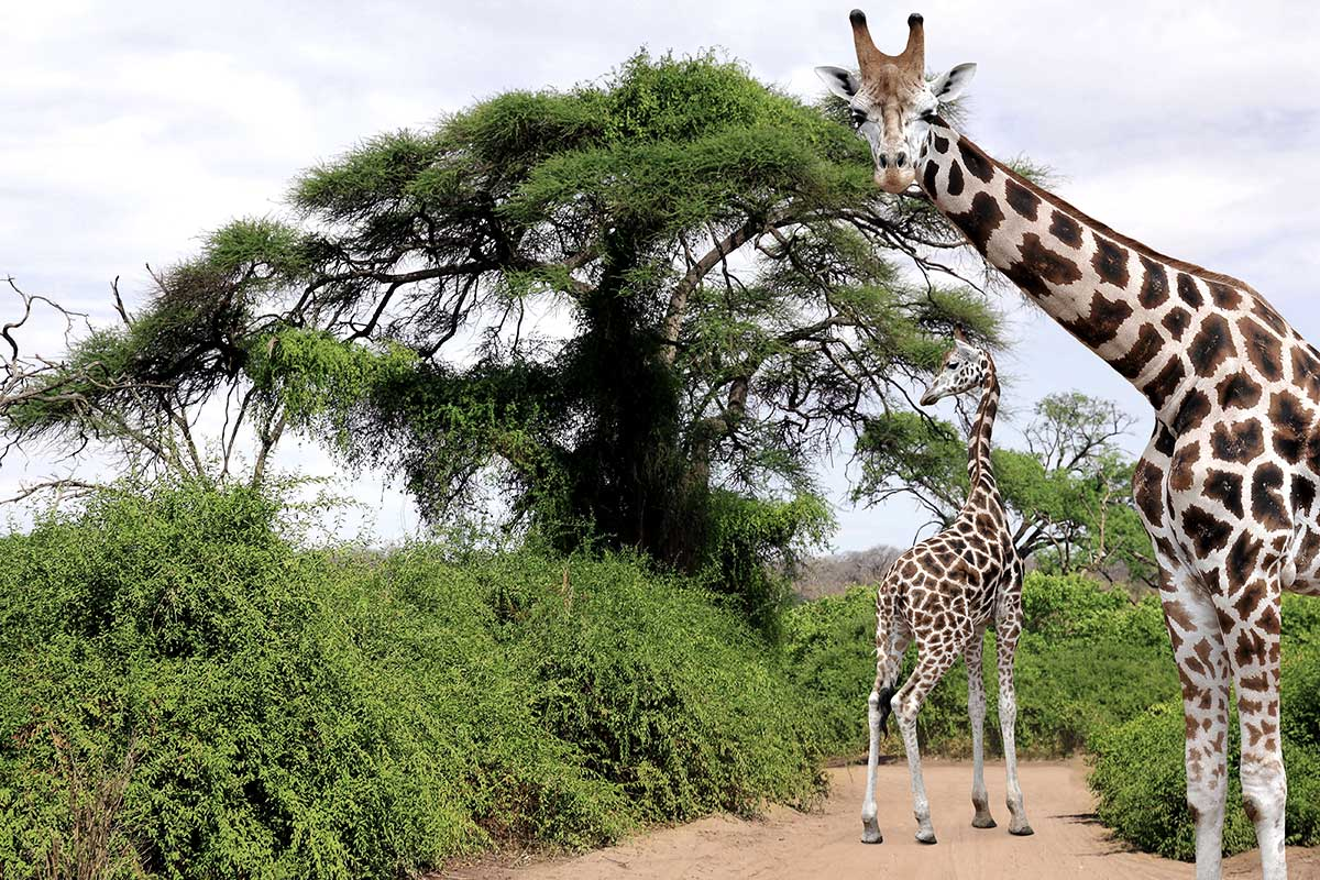 Afrique du Sud - Swaziland-Eswatini - Circuit Sanibona Africa